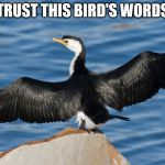 Duckguin | TRUST THIS BIRD'S WORDS | image tagged in duckguin | made w/ Imgflip meme maker