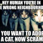 Wrong Neighboorhood Cats Meme | HEY HUMAN YOU'RE IN THE WRONG NEIGHBOURHOOD IF YOU WANT TO ADOPT A CAT, NOW SCRAM | image tagged in memes,wrong neighboorhood cats | made w/ Imgflip meme maker