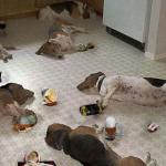 Drunk dogs after party meme