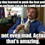 Well That Escalated Quickly Meme | My dog learned to push the foot pedal on the garbage can so he could eat out of it. I'm not even mad. Actually that's amazing. | image tagged in memes,well that escalated quickly | made w/ Imgflip meme maker