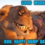 Camel smile | GOOD   MORNING DUH,  HAPPY  HUMP  DAY ? | image tagged in camel smile | made w/ Imgflip meme maker
