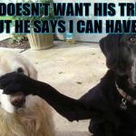Dogs | HE DOESN'T WANT HIS TREAT BUT HE SAYS I CAN HAVE IT | image tagged in dogs | made w/ Imgflip meme maker