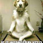 Yoga Dog | IS IT WEDNESDAY YET!? | image tagged in yoga dog | made w/ Imgflip meme maker