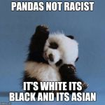 Panda | PANDAS NOT RACIST IT'S WHITE ITS BLACK AND ITS ASIAN | image tagged in panda | made w/ Imgflip meme maker