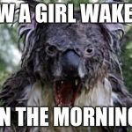 Angry Koala Meme | HOW A GIRL WAKE UP IN THE MORNING | image tagged in memes,angry koala | made w/ Imgflip meme maker