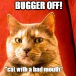 "Suspicious Cat Meme | BUGGER OFF! ""cat with a bad mouth"" 