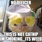 Fear And Loathing Cat Meme | NO OFFICER THIS IS NOT CATNIP IM SMOKING...ITS WEED. | image tagged in memes,fear and loathing cat | made w/ Imgflip meme maker
