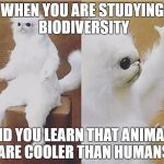 Confused Monkey / Cat | WHEN YOU ARE STUDYING BIODIVERSITY AND YOU LEARN THAT ANIMALS ARE COOLER THAN HUMANS | image tagged in confused monkey / cat | made w/ Imgflip meme maker