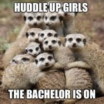 Animals Hugging | HUDDLE UP GIRLS THE BACHELOR IS ON | image tagged in animals hugging | made w/ Imgflip meme maker