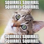 Random Cat | SQUIRREL SQUIRREL SQUIRREL SQUIRREL SQUIRREL SQUIRREL SQUIRREL SQUIRREL | image tagged in random cat | made w/ Imgflip meme maker