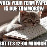 tired cat | WHEN YOUR TERM PAPER IS DUE TOMMOROW BUT IT'S 12 :00 MIDNIGHT | image tagged in tired cat | made w/ Imgflip meme maker