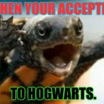 Turtle Say What? | WHEN YOUR ACCEPTED TO HOGWARTS. | image tagged in turtle say what | made w/ Imgflip meme maker
