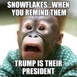 Shocked Snowflakes  | SNOWFLAKES...WHEN YOU REMIND THEM TRUMP IS THEIR PRESIDENT | image tagged in shocked monkey | made w/ Imgflip meme maker