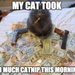 Pimp Cat Big Daddy Catnip | MY CAT TOOK TO MUCH CATNIP THIS MORNING | image tagged in pimp cat big daddy catnip | made w/ Imgflip meme maker