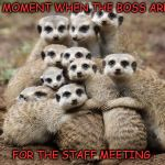 Animals Hugging | THAT MOMENT WHEN THE BOSS ARRIVES FOR THE STAFF MEETING. | image tagged in animals hugging | made w/ Imgflip meme maker