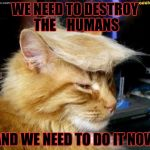 donald trump cat | WE NEED TO DESTROY THE    HUMANS AND WE NEED TO DO IT NOW | image tagged in donald trump cat | made w/ Imgflip meme maker
