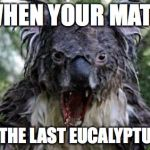 Over It... | WHEN YOUR MATE TAKES THE LAST EUCALYPTUS LEAF. | image tagged in memes,angry koala | made w/ Imgflip meme maker