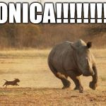 rhino- run | MONICA!!!!!!!!!!! | image tagged in animals,rhino,too fast too furious | made w/ Imgflip meme maker