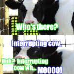 Bad cow knock-knock joke (hope it hasn't been done already) | Knock knock. MOOOO! Who's there? Interrupting cow. Huh?  Interrupting cow wh... | image tagged in cows | made w/ Imgflip meme maker