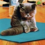 yoga cat | LAST CLASS BEFORE CHRISTMAS | image tagged in yoga cat | made w/ Imgflip meme maker