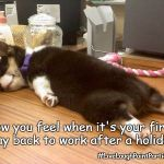 Tired dog | How you feel when it's your first day back to work after a holiday #LiveLaughPaintParties | image tagged in tired dog | made w/ Imgflip meme maker