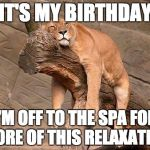 sleeping lion | IT'S MY BIRTHDAY I'M OFF TO THE SPA FOR MORE OF THIS RELAXATION | image tagged in sleeping lion | made w/ Imgflip meme maker