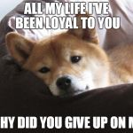 Sad Doge | ALL MY LIFE I'VE BEEN LOYAL TO YOU WHY DID YOU GIVE UP ON ME | image tagged in sad doge | made w/ Imgflip meme maker