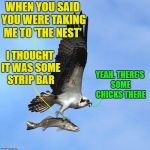 Bad luck fish | WHEN YOU SAID YOU WERE TAKING ME TO 'THE NEST' I THOUGHT IT WAS SOME STRIP BAR YEAH. THERE'S SOME CHICKS THERE | image tagged in fish,funny memes | made w/ Imgflip meme maker