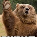 grizzly bear | TASTES LIKE... TOURIST! | image tagged in grizzly bear | made w/ Imgflip meme maker