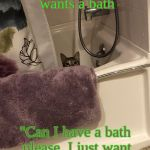 "Cat wanting a Bath | When your cat wants a bath ""Can I have a bath please. I just want the views for best fur"". 
