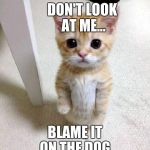 Cute Cat Meme | DON'T LOOK AT ME... BLAME IT ON THE DOG | image tagged in memes,cute cat | made w/ Imgflip meme maker