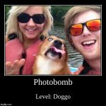 Photobomb | Level: Doggo | image tagged in funny,demotivationals | made w/ Imgflip demotivational maker