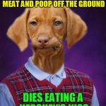 Bad Luck Raydog | EATS 2 WEEK OLD ROTTEN MEAT AND POOP OFF THE GROUND DIES EATING A HERSHEY'S KISS | image tagged in bad luck raydog,memes,rotten meat,chocolate,hershey kiss,dogs can't eat chocolate | made w/ Imgflip meme maker