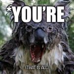 Grammar: A Dying Art | *YOU'RE (THAT IS ALL) | image tagged in memes,angry koala,grammar,bad grammar and spelling memes | made w/ Imgflip meme maker