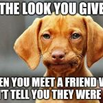 Frowning Dog | THE LOOK YOU GIVE WHEN YOU MEET A FRIEND WHO DIDN'T TELL YOU THEY WERE SICK. | image tagged in frowning dog | made w/ Imgflip meme maker