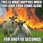 Da evil cows | THIS IS WHAT HAPPENS WHEN YOU LEAVE YOUR COWS ALONE FOR ONLY 10 SECONDS | image tagged in memes,evil cows | made w/ Imgflip meme maker