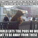 i wonder what it would be like if we were bears | SOMETIMES I THINK WHY DO WE LIVE IN THE WILD. WHY DONT WE TRY TO BE CIVIL WITH THE WORLD THEN I TOLD MY SELF THE WORLD EATS TIDE PODS NO WON | image tagged in memes,city bear,scumbag | made w/ Imgflip meme maker