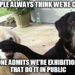 Dogs | PEOPLE ALWAYS THINK WE'RE CUTE NO ONE ADMITS WE'RE EXHIBITIONIST THAT DO IT IN PUBLIC | image tagged in dogs | made w/ Imgflip meme maker