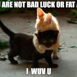 kitten hug | YOU ARE NOT BAD LUCK OR FAT AND I  WUV U | image tagged in kitten hug | made w/ Imgflip meme maker