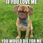Grumpy Dog | IF YOU LOVE ME YOU WOULD DIE FOR ME | image tagged in grumpy dog | made w/ Imgflip meme maker