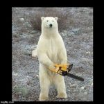 Chainsaw Bear Meme | image tagged in memes,chainsaw bear | made w/ Imgflip meme maker