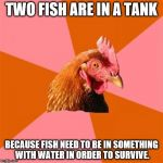 Anti Joke Chicken Meme | TWO FISH ARE IN A TANK BECAUSE FISH NEED TO BE IN SOMETHING WITH WATER IN ORDER TO SURVIVE. | image tagged in memes,anti joke chicken | made w/ Imgflip meme maker