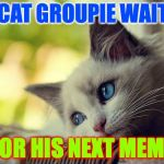 First World Problems Cat Meme | RAYCAT GROUPIE WAITING FOR HIS NEXT MEME | image tagged in memes,first world problems cat,raycat,waiting | made w/ Imgflip meme maker