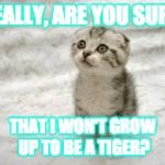 Sad Cat Meme | REALLY, ARE YOU SURE THAT I WON'T GROW UP TO BE A TIGER? | image tagged in memes,sad cat | made w/ Imgflip meme maker