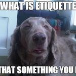 High Dog Meme | WHAT IS ETIQUETTE IS THAT SOMETHING YOU EAT | image tagged in memes,high dog | made w/ Imgflip meme maker