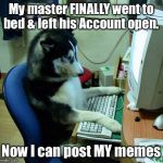 Dog's Meme makes Front Page | My master FINALLY went to bed & left his Account open. Now I can post MY memes | image tagged in memes,i have no idea what i am doing,dog meme,front page,calm down | made w/ Imgflip meme maker