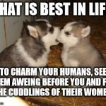 Cuddles, what is best in life?  | WHAT IS BEST IN LIFE? TO CHARM YOUR HUMANS, SEE THEM AWEING BEFORE YOU AND FEEL THE CUDDLINGS OF THEIR WOMEN! | image tagged in memes,cute puppies,conan | made w/ Imgflip meme maker