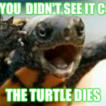 Turtle Say What? | WHEN YOU  DIDN'T SEE IT COMING THE TURTLE DIES | image tagged in turtle say what | made w/ Imgflip meme maker