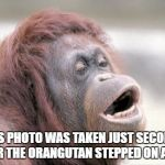 Monkey OOH Meme | THIS PHOTO WAS TAKEN JUST SECONDS AFTER THE ORANGUTAN STEPPED ON A LEGO | image tagged in memes,monkey ooh | made w/ Imgflip meme maker