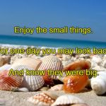 Sea shells | Enjoy the small things. And know they were big. For one day you may look back | image tagged in sea shells | made w/ Imgflip meme maker